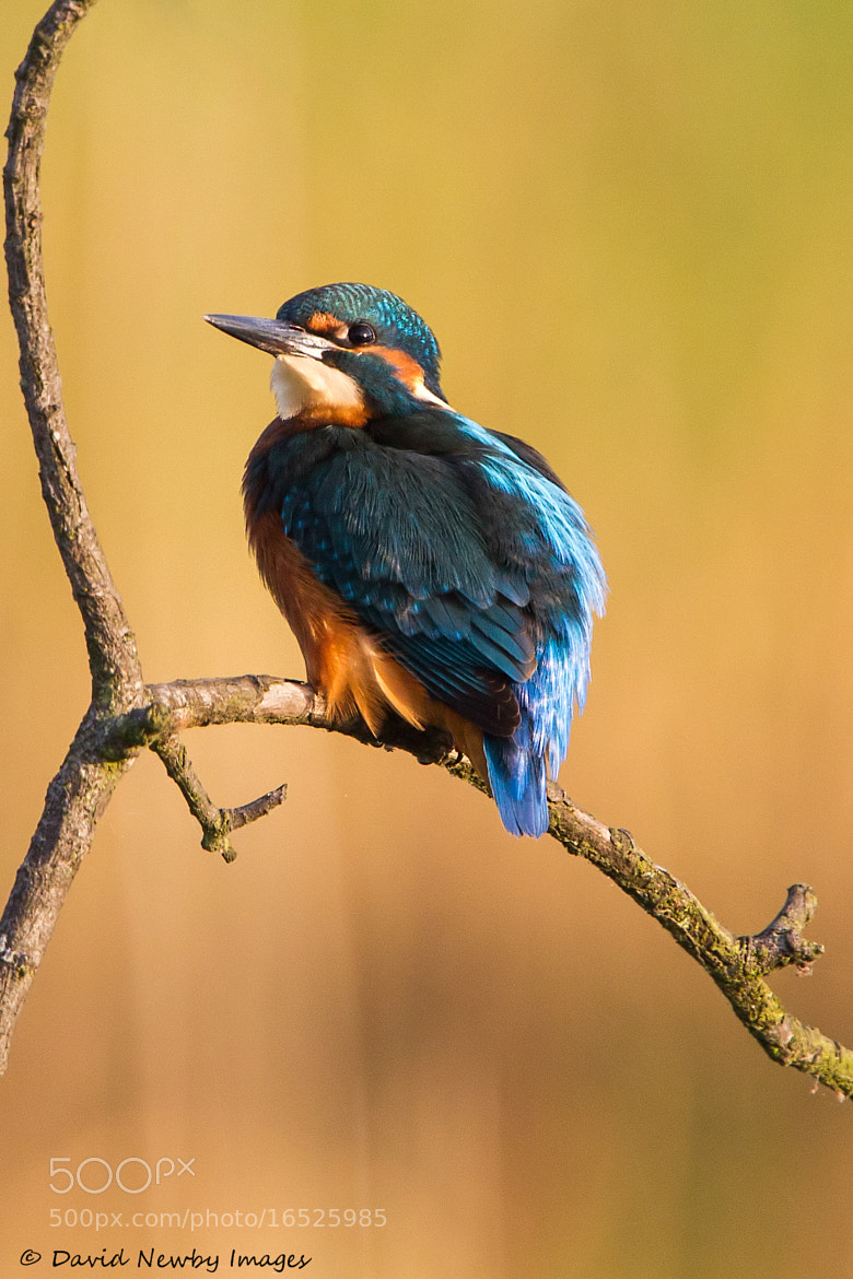 Photograph King of the pond by David Newby on 500px