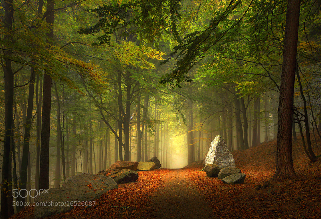 Photograph Forest Trail by Kilian Schönberger on 500px