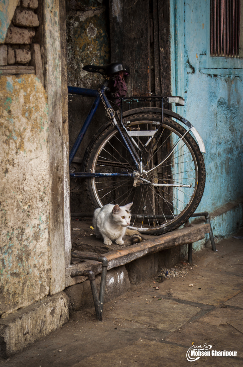 Photograph cat  by Mohsen  Ghanipour on 500px