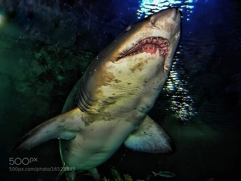 Photograph jaws by Sedat Ozdemir on 500px