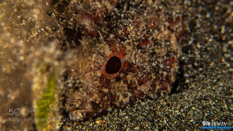 Scorpion Lionfish by IRWIN ANG (mackasha) on 500px.com