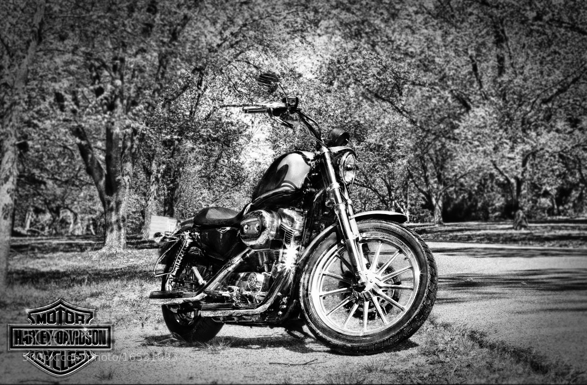 Photograph HD Sportster by Cris Saez on 500px