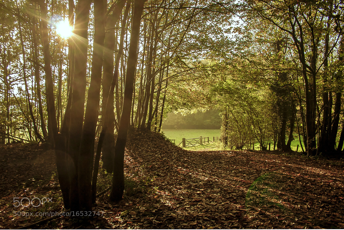 Photograph woodland sunset by David Dobson on 500px