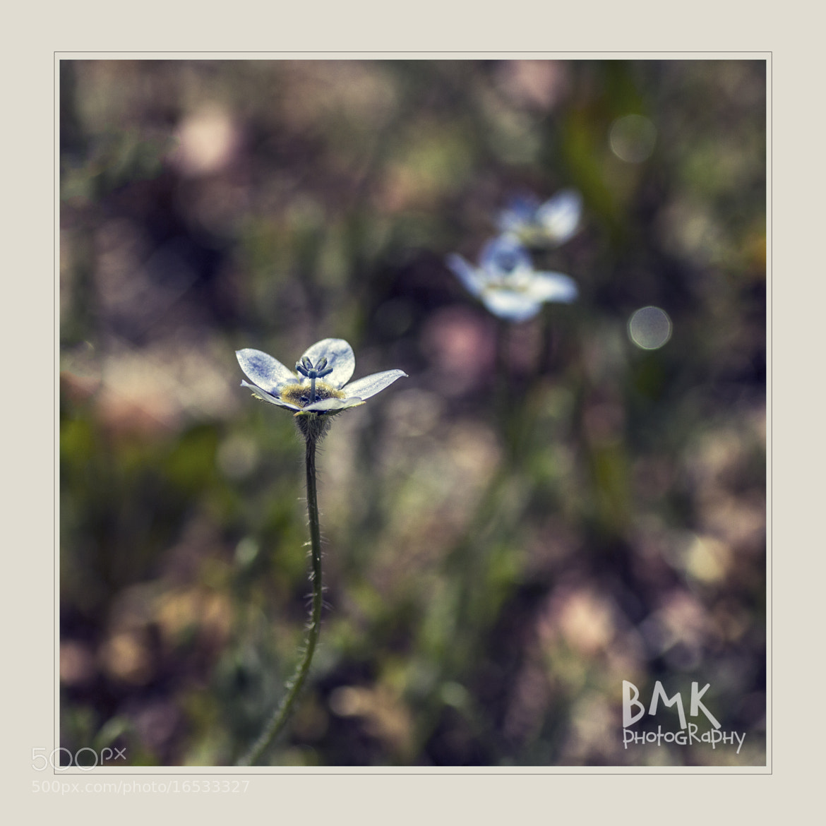 Photograph Little Weed by Bianca K on 500px
