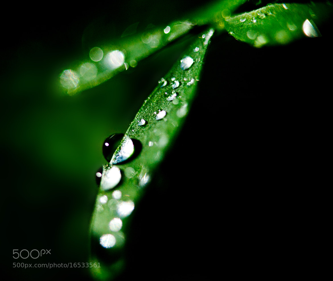 Photograph waterdrops by Werner Kissel on 500px