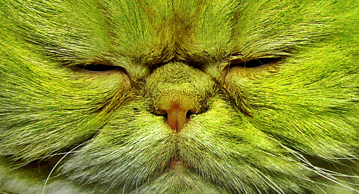 Photograph Cat Grass by Emin Kucuk on 500px