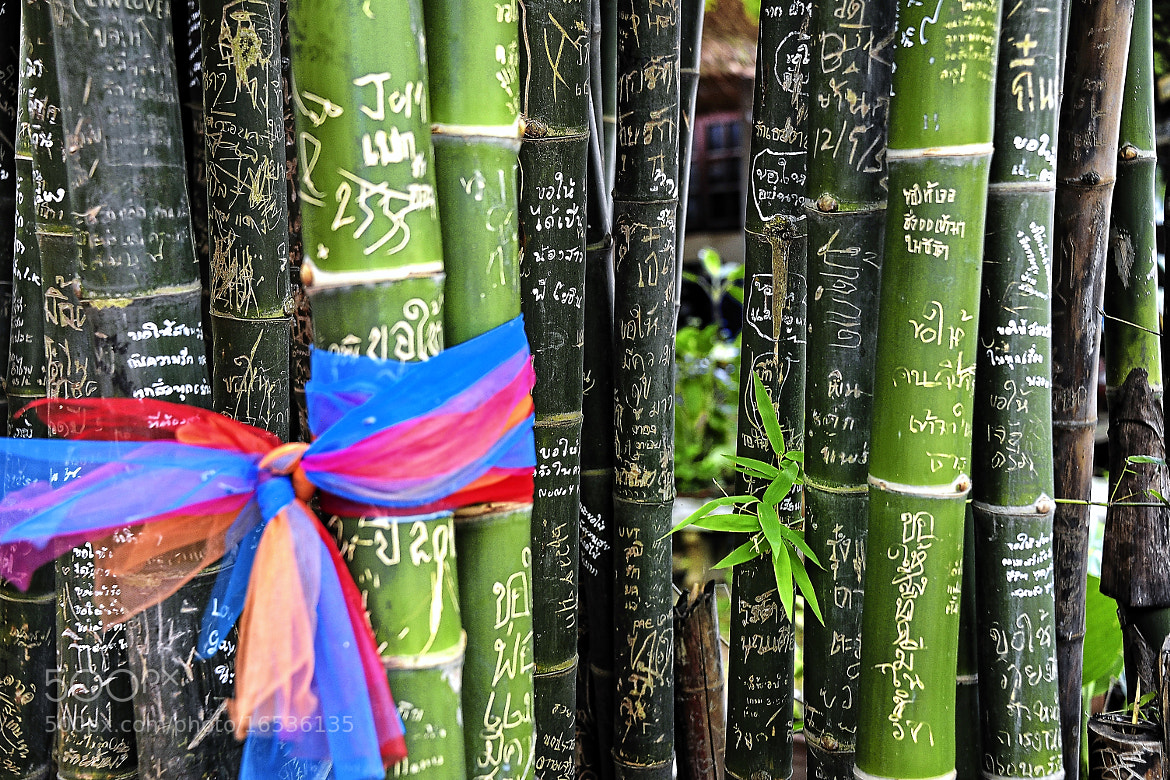 Photograph Love notes on bamboo by Cris T on 500px