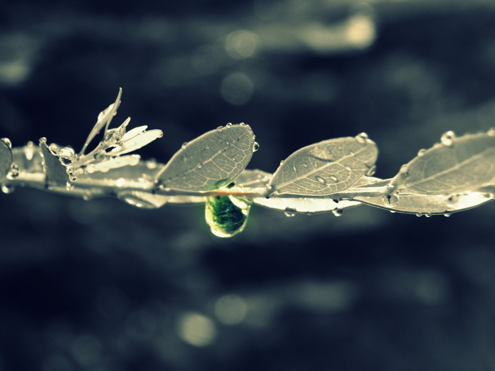 Photograph one single drop by aqiub rehan on 500px