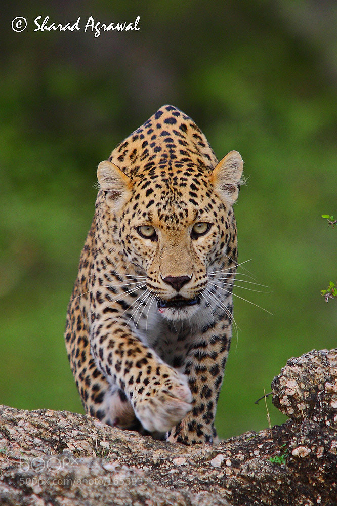 Photograph Incoming Eyes by Sharad Agrawal on 500px