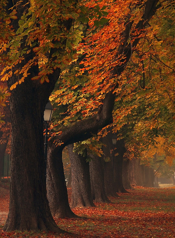 Photograph An autumn series by Jasmina Gorjanski on 500px