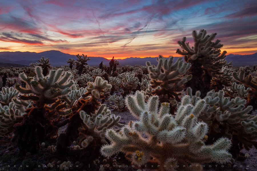 Photograph Desert Symphony II by Sean Bagshaw on 500px