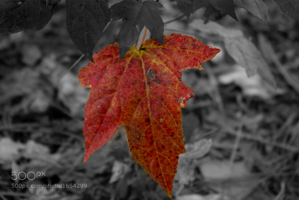 Photograph Leaves by TL PhotoWorks on 500px