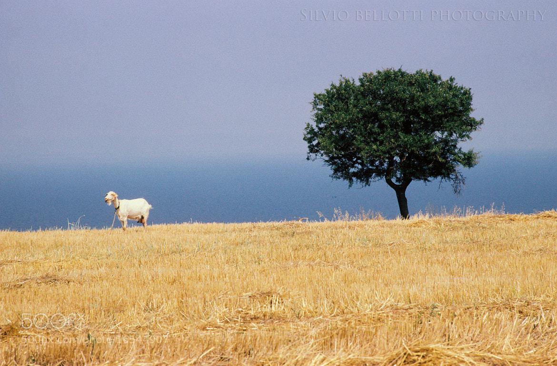 Photograph Mediterraneo by silvio bellotti on 500px