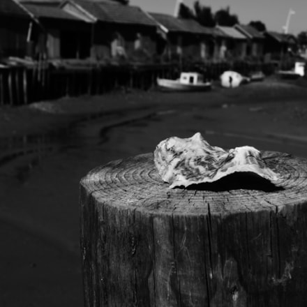 Lonely Oyster, Panasonic DMC-ZX1