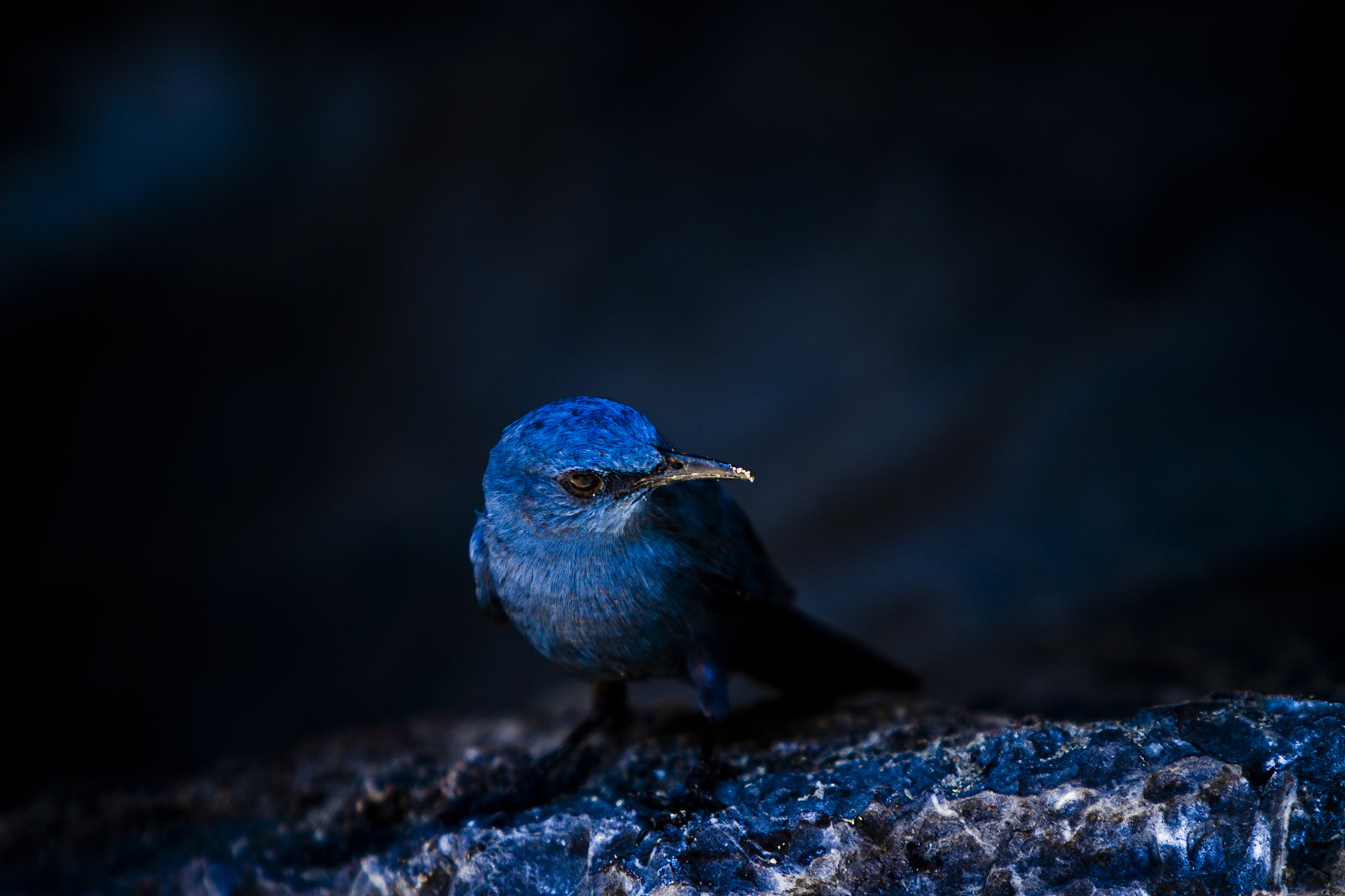 Photograph Blue Kingfisher by Zhang Rui  张睿 on 500px
