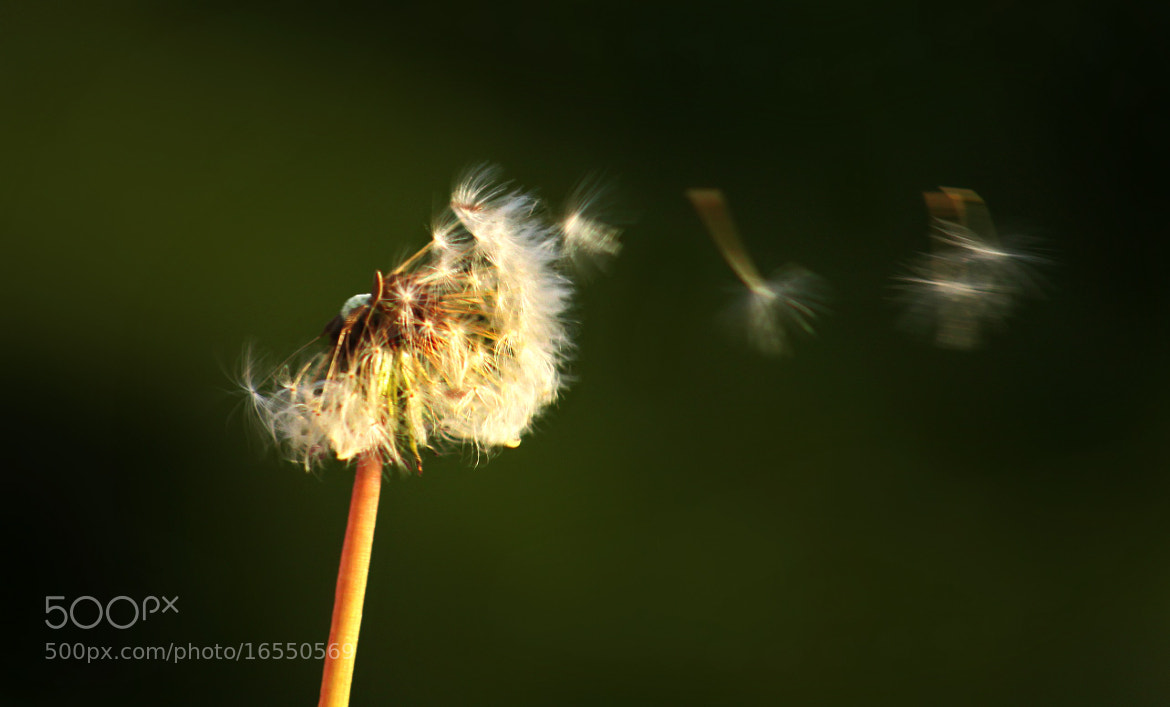 Photograph Sow the wind by Sandrine Fernandes on 500px
