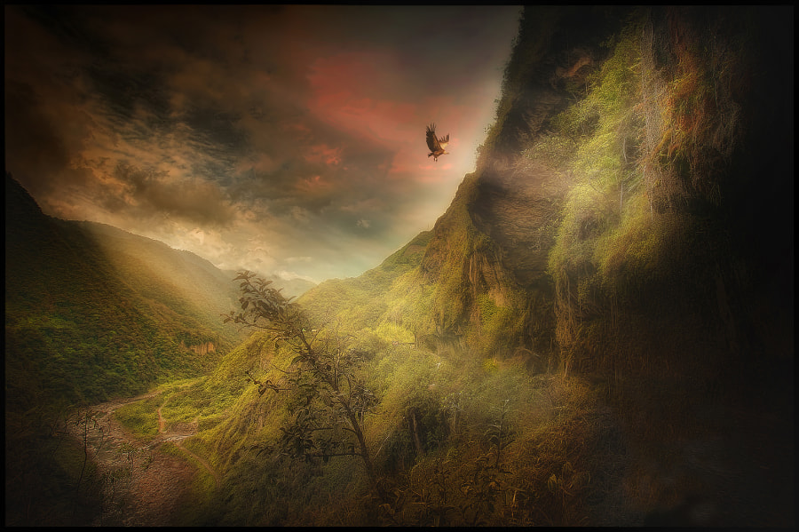 The Condor of the Andes. by jose arley agudelo on 500px.com