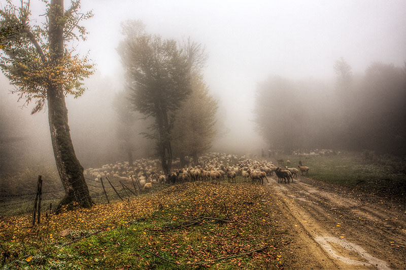 Photograph The Road in The Fog - 2 by Nima Tadjeddin on 500px