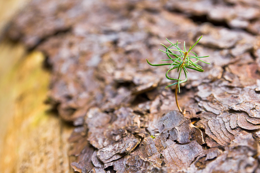 Photograph Little Tree by Benjamin Egermann on 500px