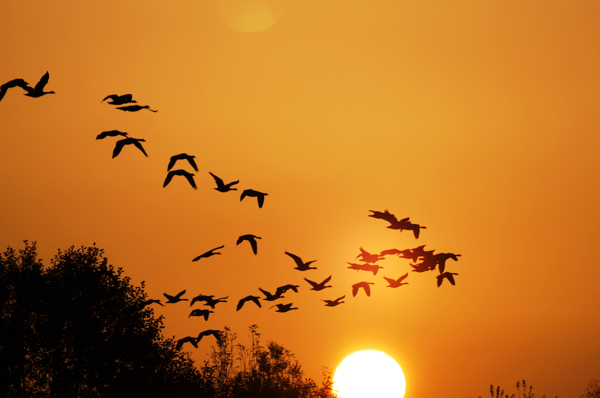 Photograph Flug in den Sonnenuntergang by Ralf Bessoth on 500px