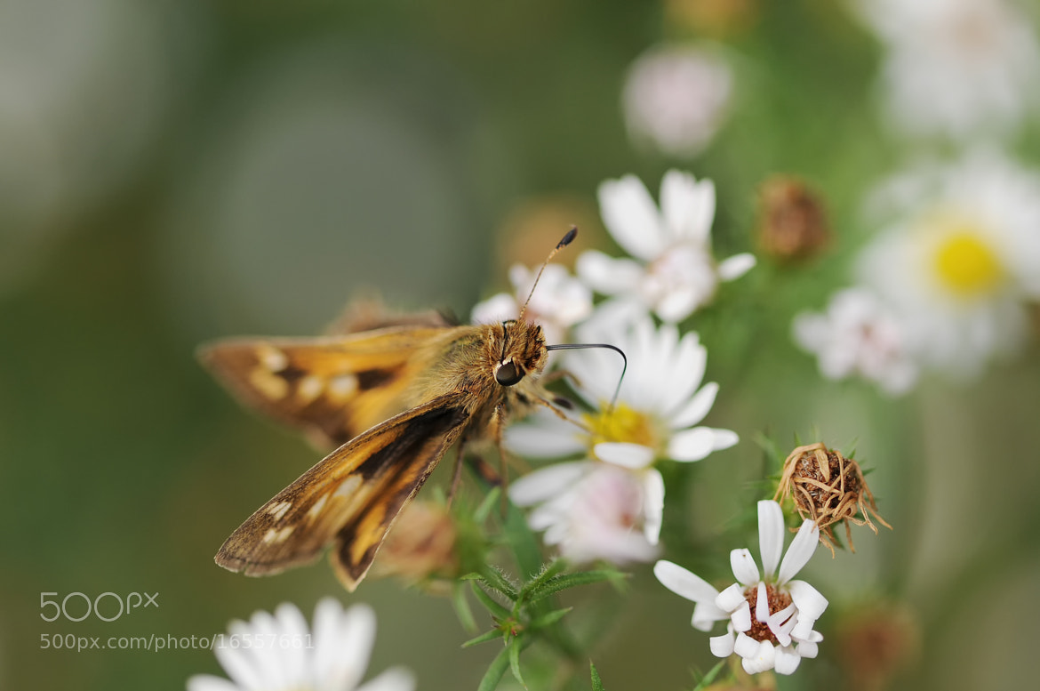 Photograph Skipper by Mark Kantner on 500px