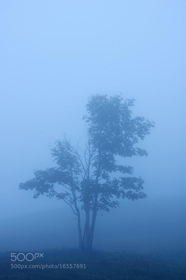 Photograph blue twilight by Elwira Podolinska on 500px