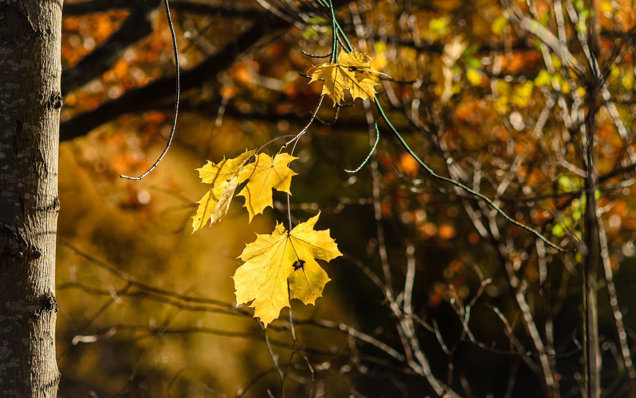 Photograph Leaves in sunlight by J-O Eriksson on 500px