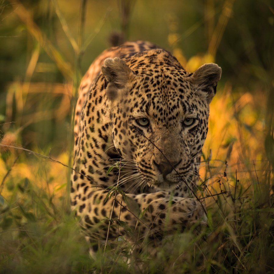 Stalking by Chris Fischer on 500px