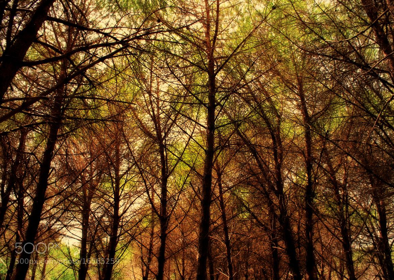 Photograph Autumn forest. by Davide  Carovana on 500px