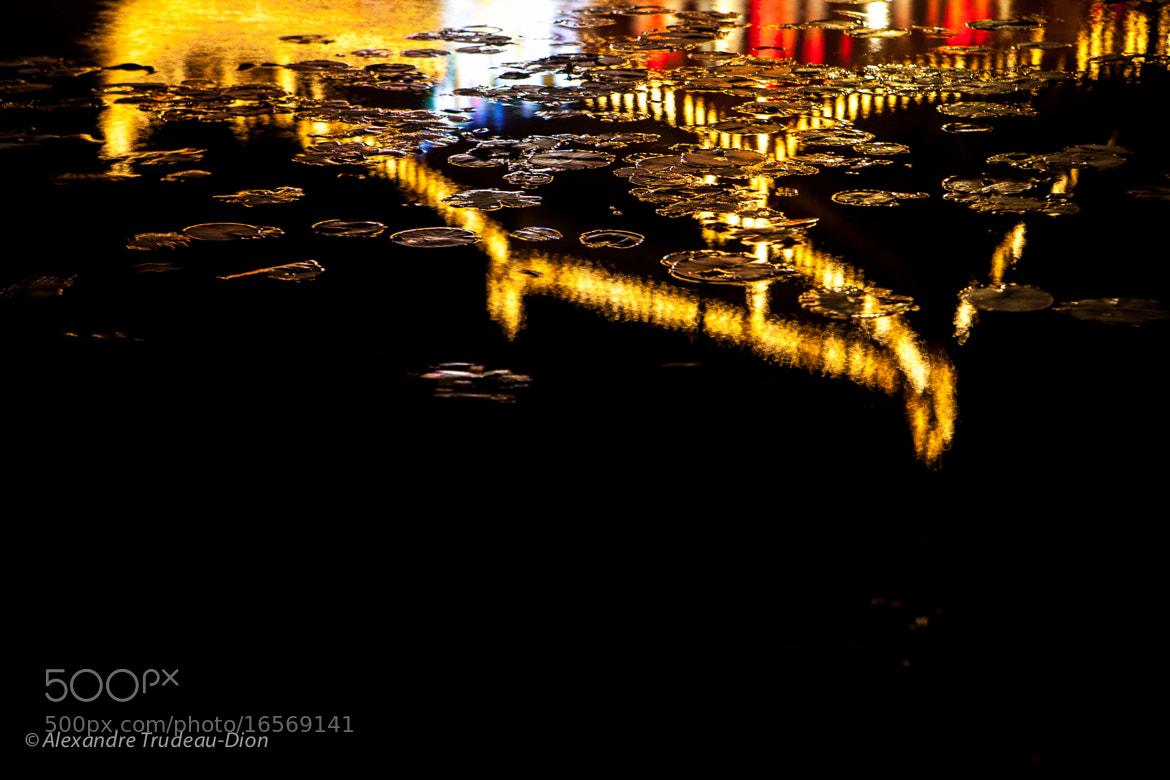 Photograph Reflection in Nymphéas by Alexandre Trudeau-Dion on 500px