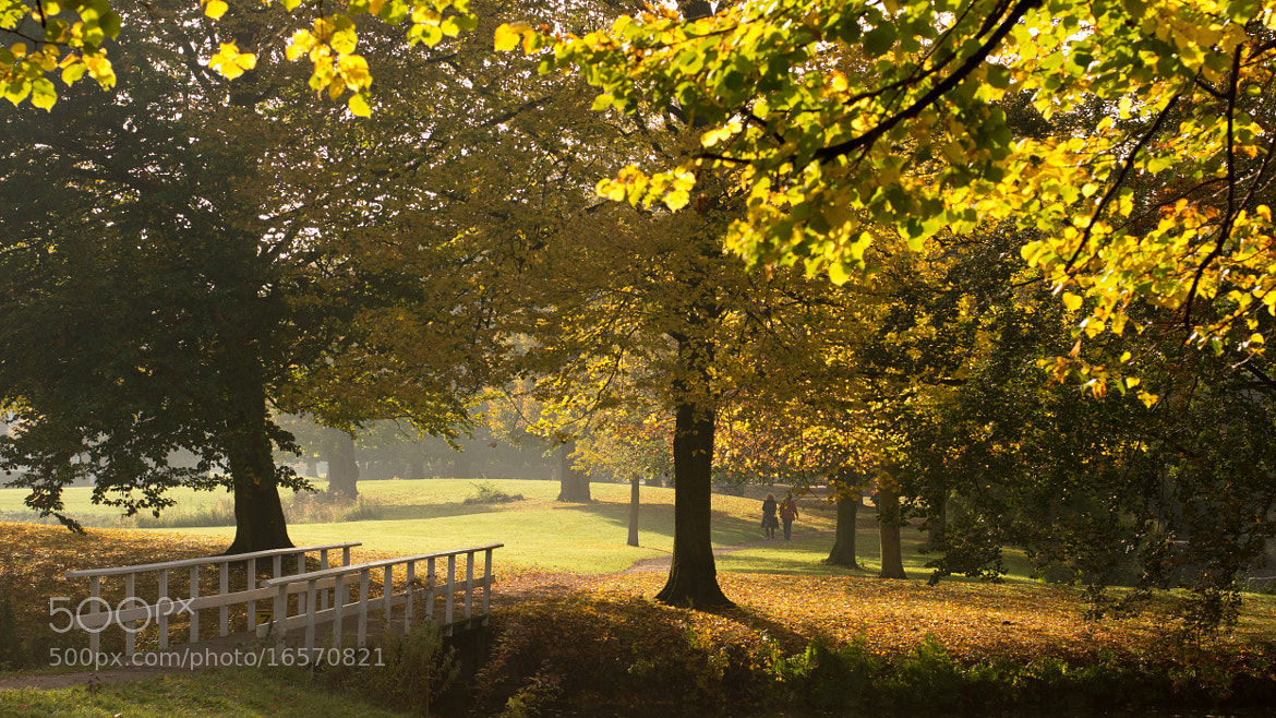 Photograph Autumn by Roelof Veenbaas on 500px