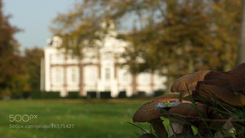 Photograph Autumn  by Roelof Veenbaas on 500px