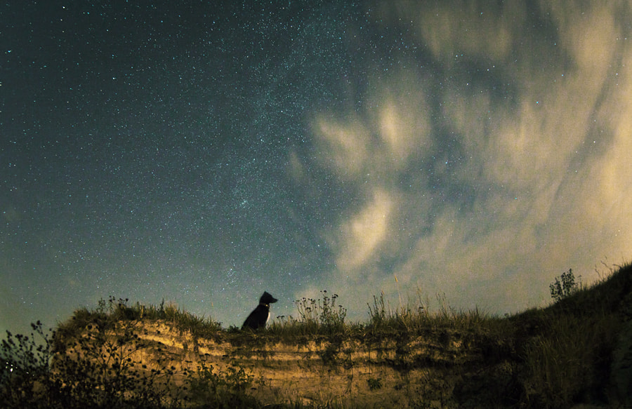 Photograph Dog and a starry sky by Evgeniy Gostuhin on 500px