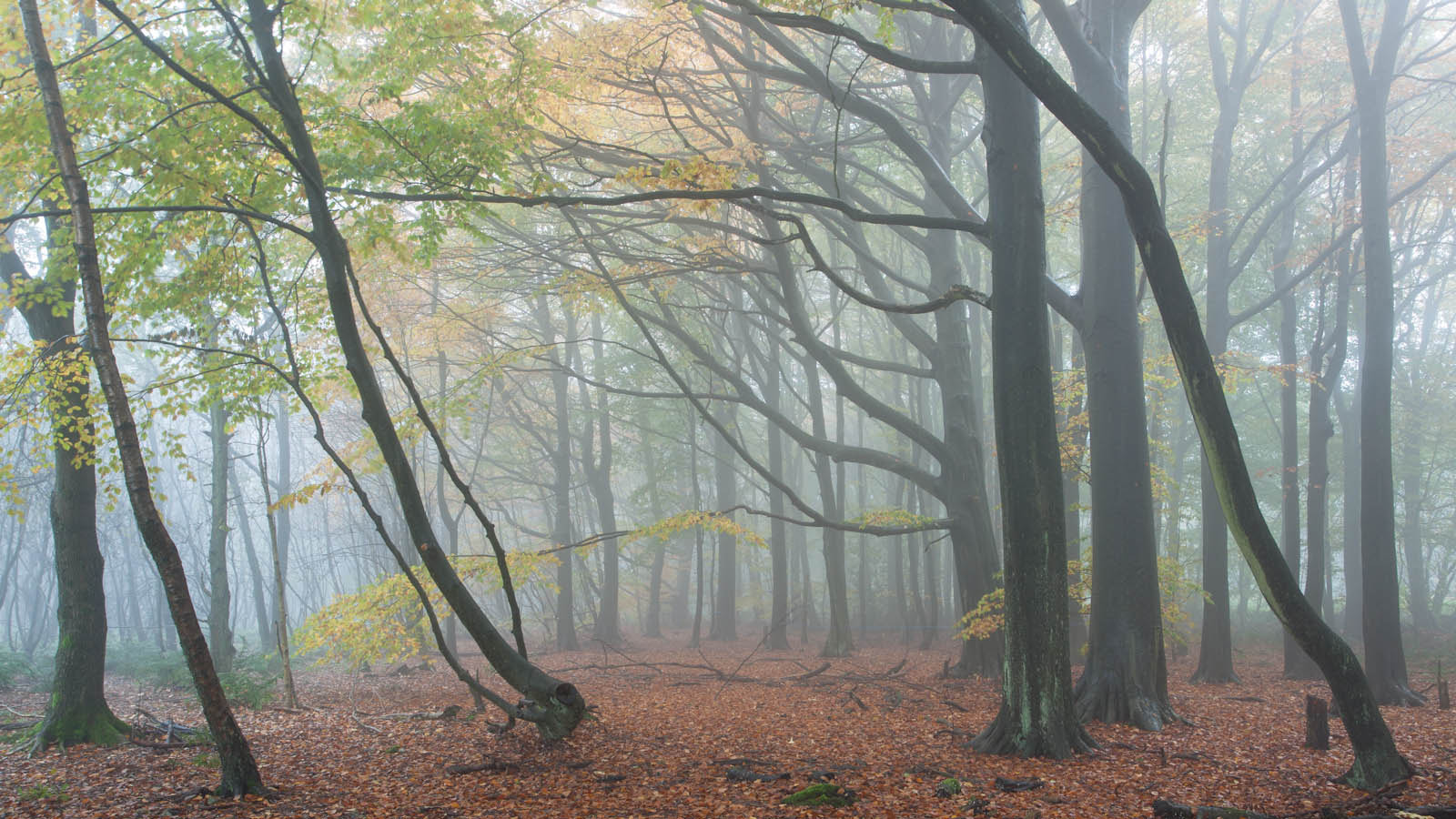 Photograph Lantlodge Wood by James Mills on 500px