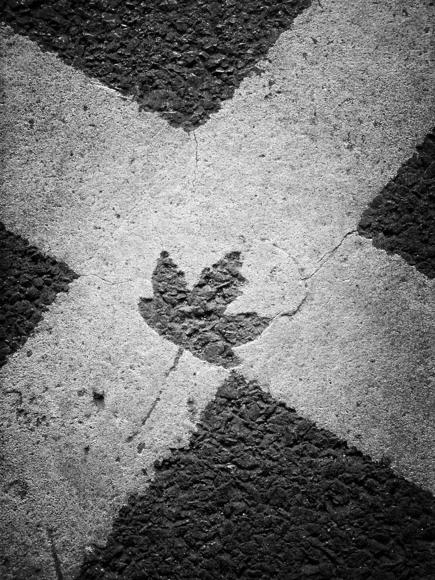 Photograph Asphalt Leaf by Derek Σωκράτης Finch on 500px