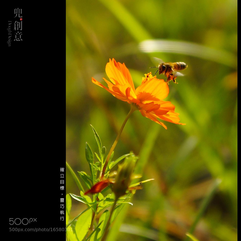 Photograph 奮鬥中! by 阿民 曾 on 500px