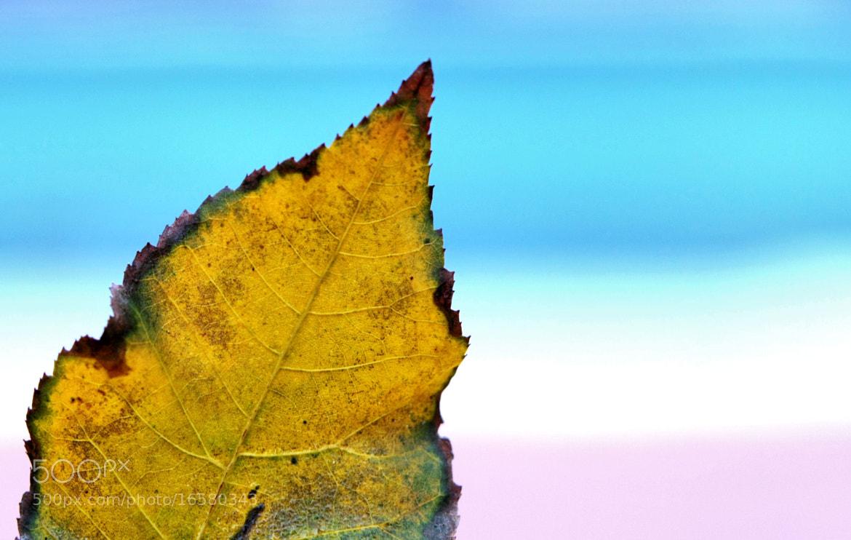Photograph Leaf by John Loreaux on 500px