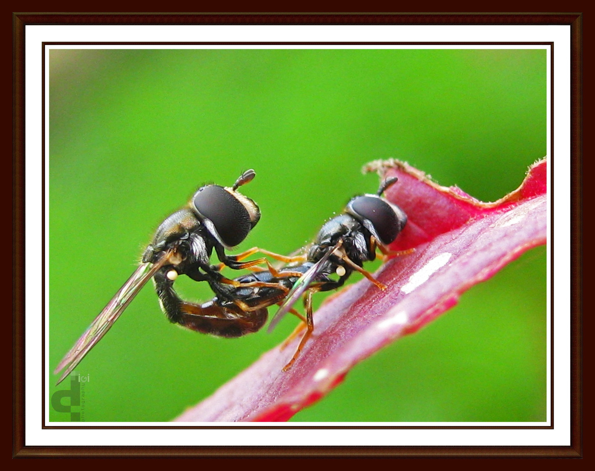 Photograph Mating by Diganta Gogoi on 500px