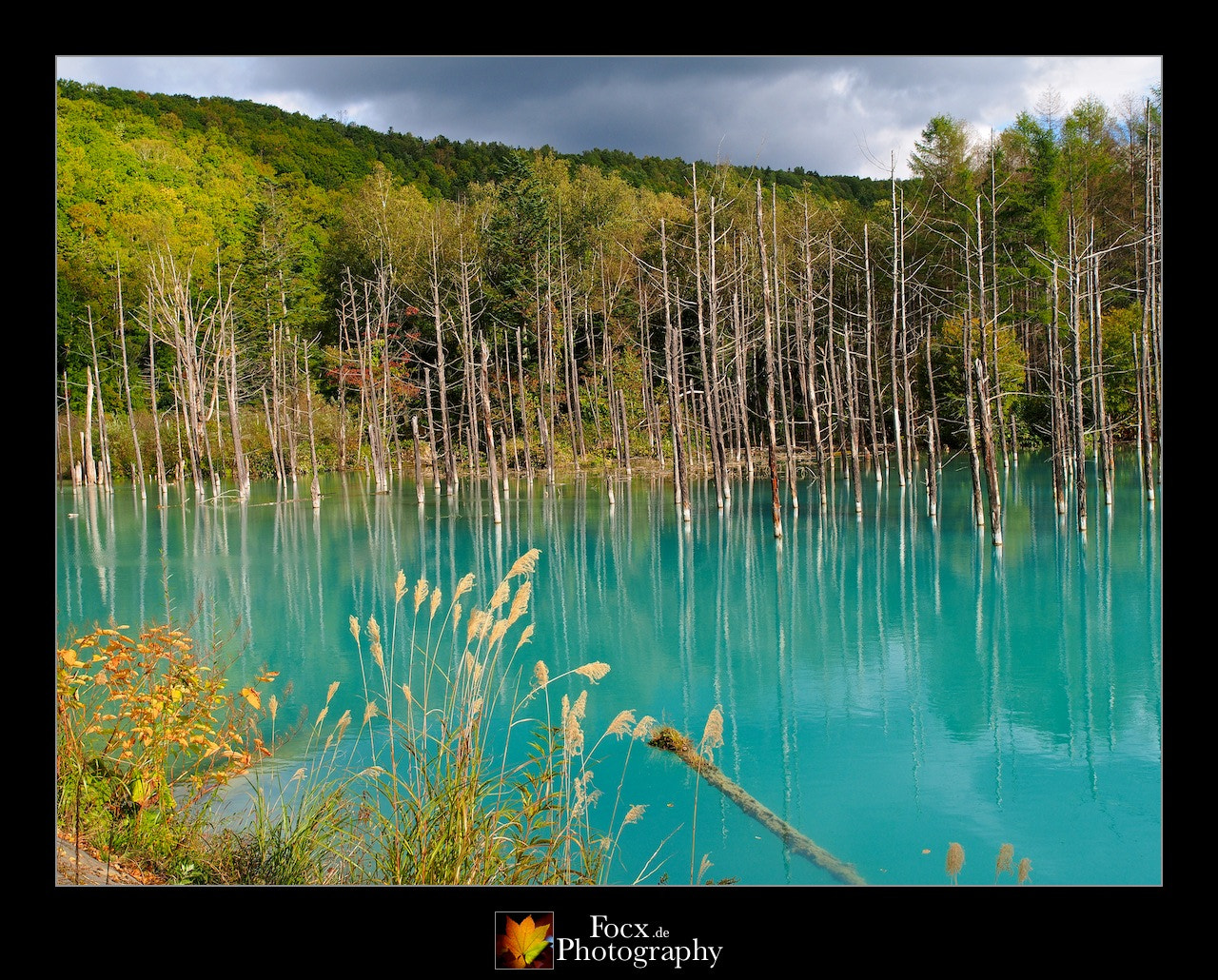 Photograph Aoike (Blue Pond, 青池) I by Christoph Rupprecht on 500px