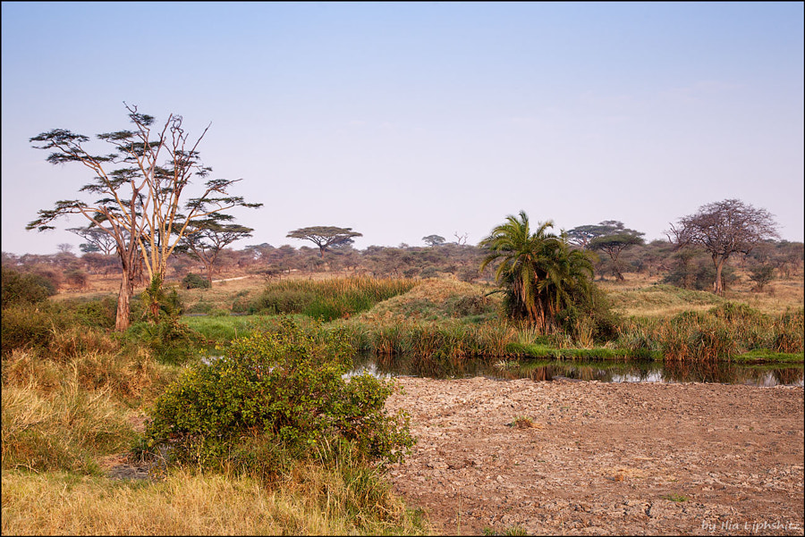 Landscapes of Serengeti №1