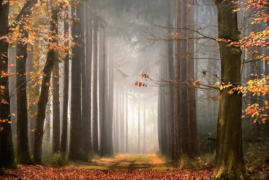 Fairy like reality by Lars van de Goor on 500px.com