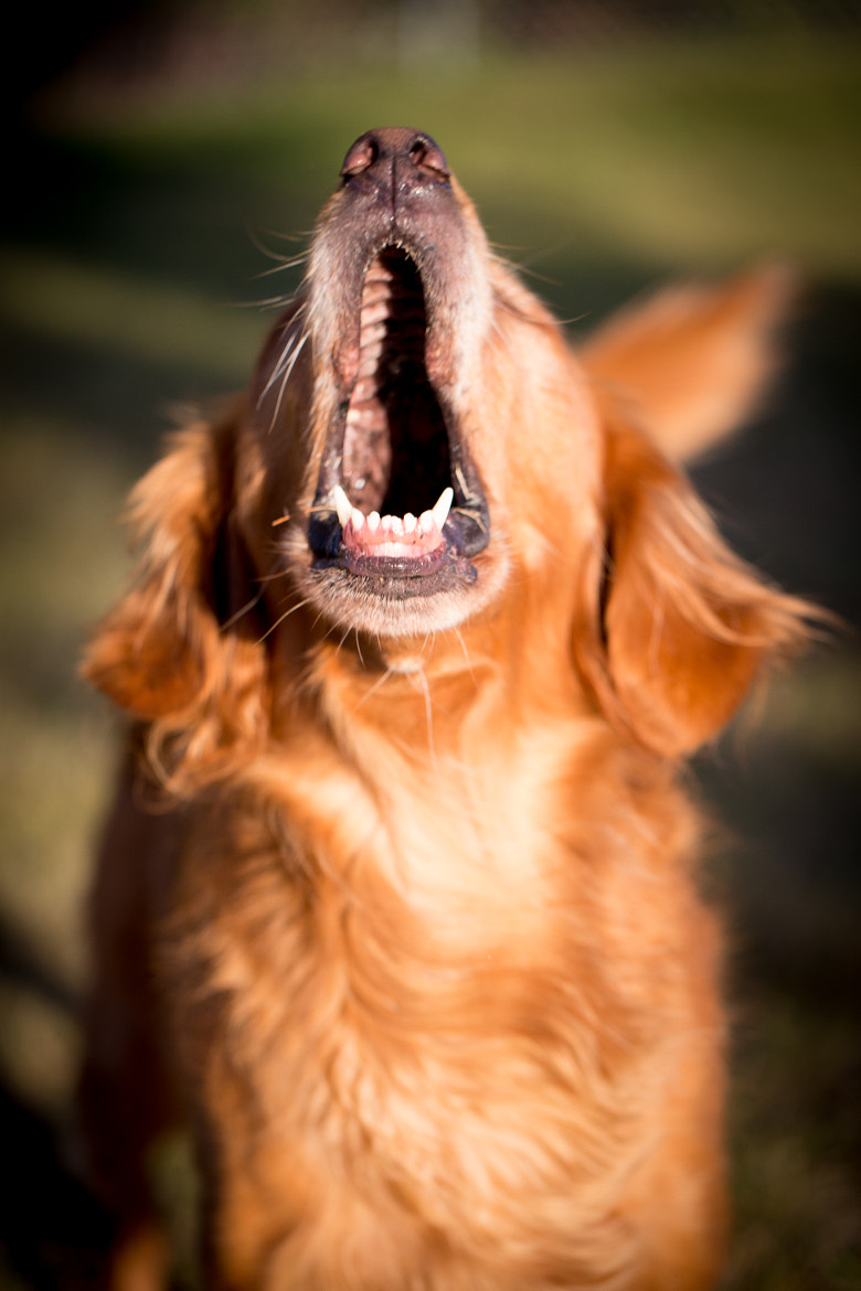 Photograph Open and say AHHHH by C. Feggestad on 500px
