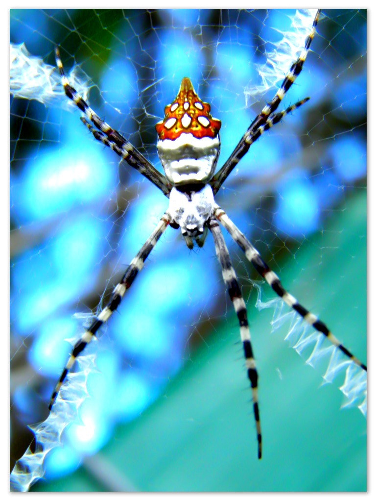 Photograph Spider by Joqui Mercado on 500px