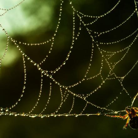 Spider catcher gems