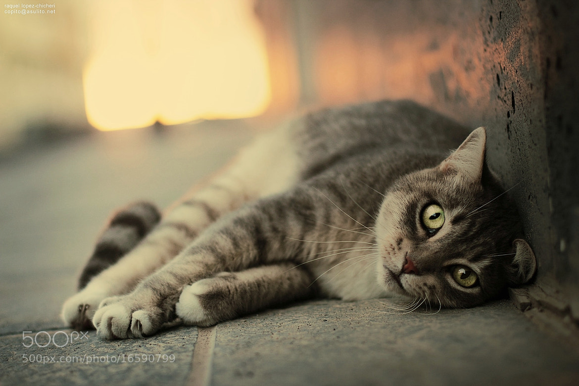 Photograph Street cat 3 (only for cat lovers) by raquel lopez-chicheri on 500px