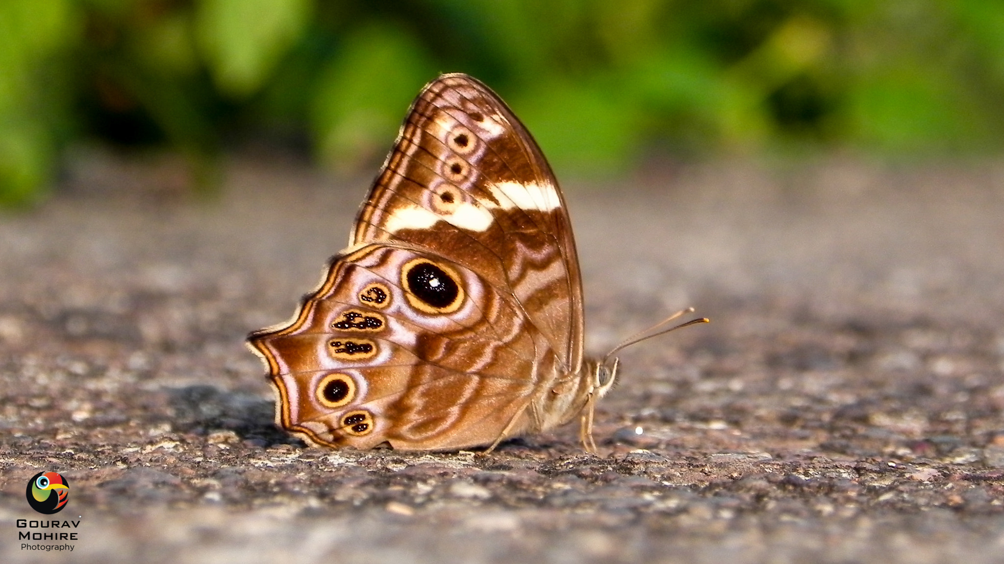 Photograph Butterfly.. by Gourav Mohire on 500px
