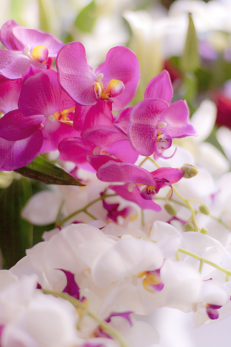 Photograph Phalaenopsis by Zhang Rui  张睿 on 500px