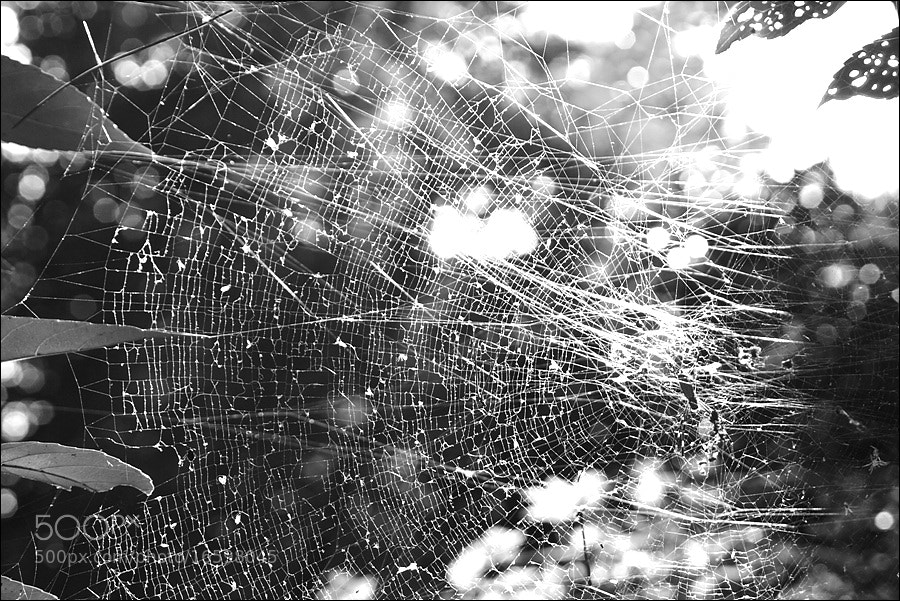 Photograph WorldWide and real Web by D W Kim on 500px