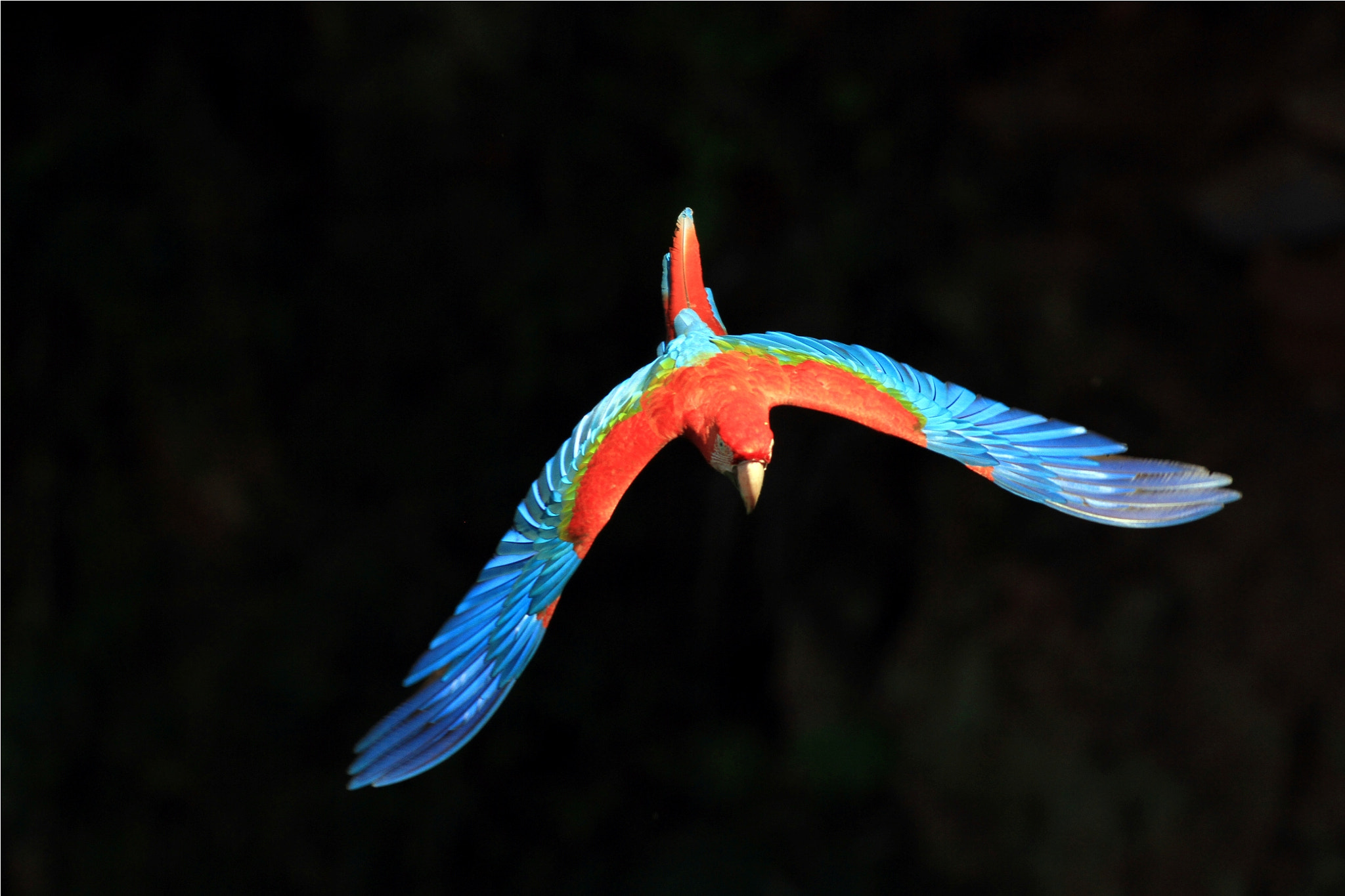 Photograph Red Macaw..... by Itamar Campos on 500px
