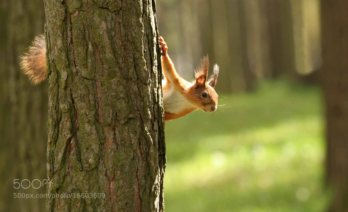 Photograph Acrobat by Marit R on 500px